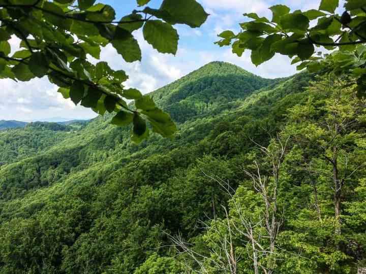 EWS - Uholka Velkya Wilderness -13024_