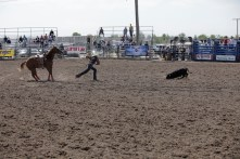 CWC_Rodeo_shortGo-77