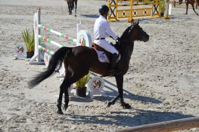 Concours Centre Equestre Sainte Hélène 10
