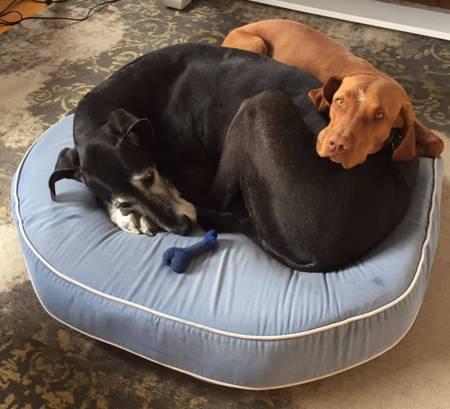 A Short Theology of Dog Ownership