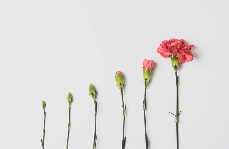 growing-vs-making
