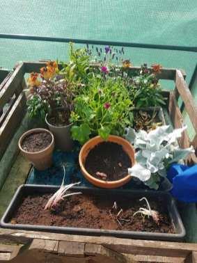 Danielle Dryburgh - Outdoor Plants 2