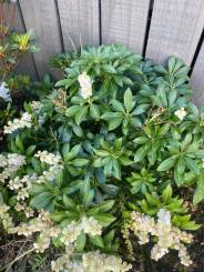 Kelly Hussain - Outdoor Plants 4