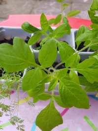 Monika J Gouws - Outdoor Plants 3