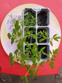 Monika J Gouws - Outdoor Plants in Trays