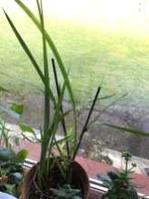 Phurpha Tsumu Lama Dhangsong - Indoor Plants 6