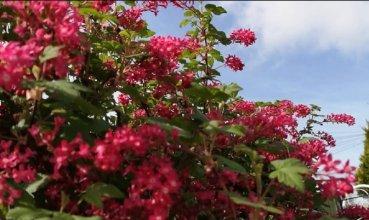 Ray Kelly - Outdoor Plants 1