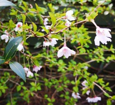 Ray Kelly - Outdoor Plants 2