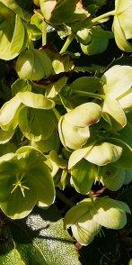 Ray Kelly - Outdoor Plants 3