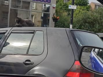 ML Genest - Cat on Car Roof