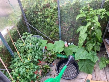 Coryn Barclay - Greenhouse Plants