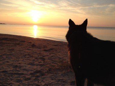 Even dogs love watching the beautiful sunsets at Ipperwash Beach! - K. Barfett