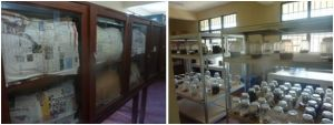 Salles des collections DEBRT CSB