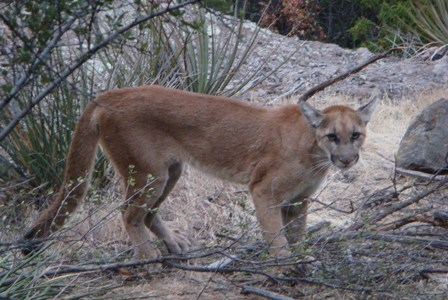 Man Attacked By A Mountain Lion in Colorado
