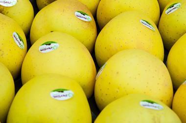 ManzanaGolden-1 Campaña de Manzana/Pera