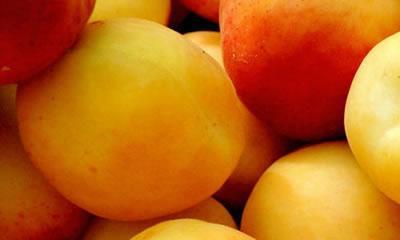 albaricoques-03 Apricot Campaign
