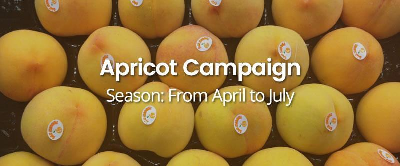 Apricot-Campaign HOME