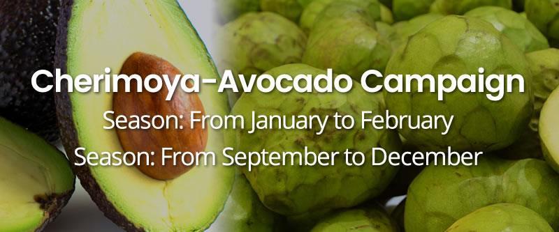 Cherimoya-Avocado-Campaign HOME