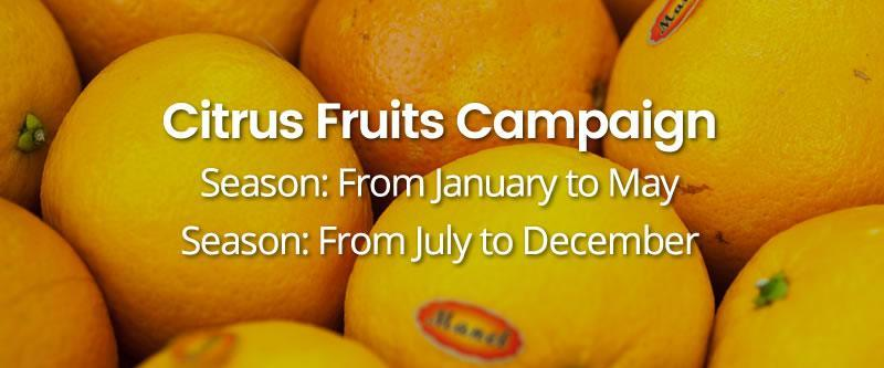 Citrus-Fruits-Campaign HOME