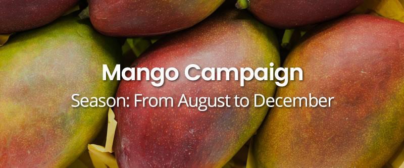 Mango-Campaign HOME