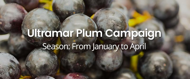 Ultramar-Plum-Campaign HOME