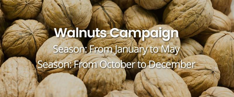 Walnuts-Campaign HOME