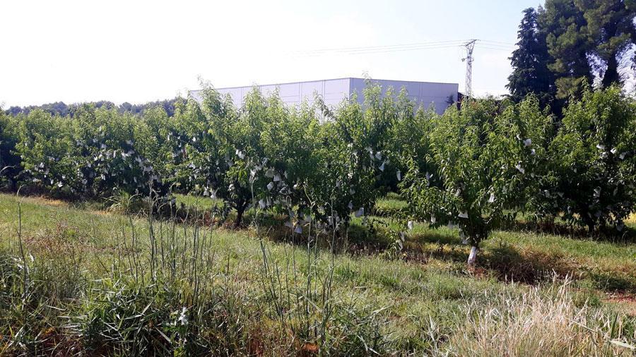 Cooperativa-de-San-Miguel-4 Centrimerca visita la Cooperativa de San Miguel Noticias