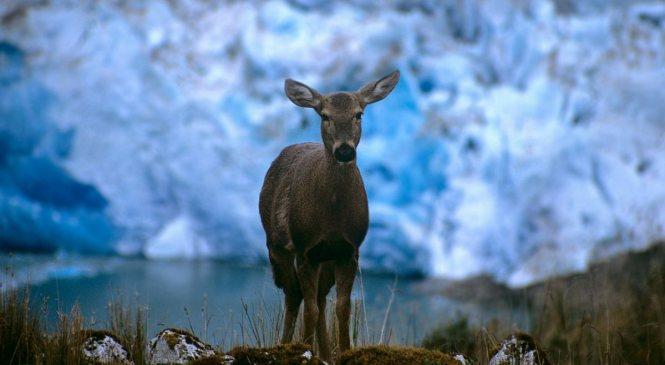 Organización animalista se pronuncia acerca de nuevo Zoológico metropolitano