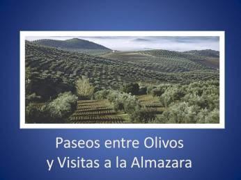 Paseo entre Olivos y Visitas a la Almazara
