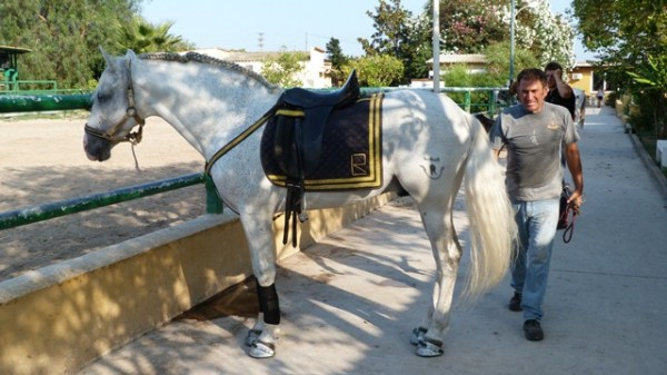 Servicio en Gandia de librea caballos y ponis