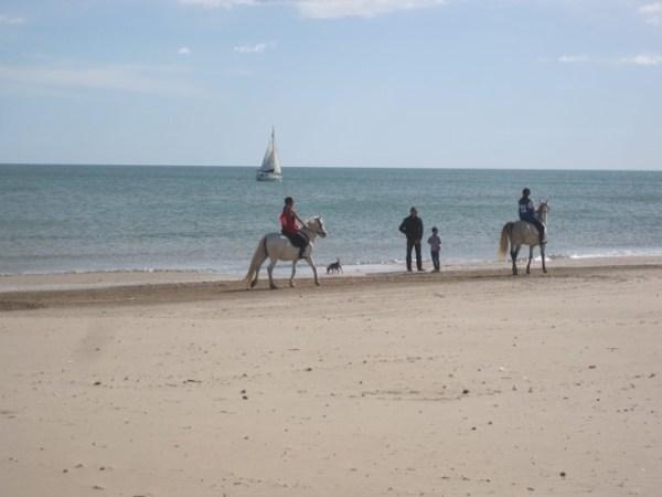 Excursiones-caballo-de-Gandia-en-la-playa