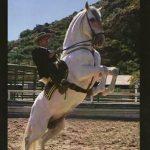Montar a caballo en Gandia