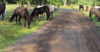 paardenfluisteraar intuitieve coach centrum equus 2