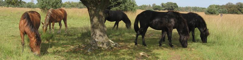 bewustzijn geneesmiddel centrum equus