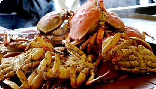 crabs up close