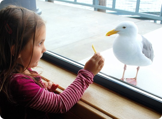 cutie with seagull