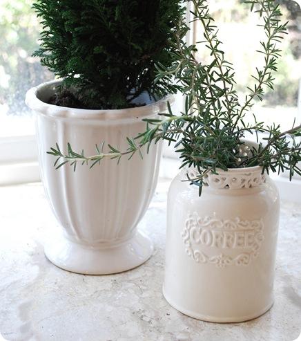 rosemary in goodwill vase