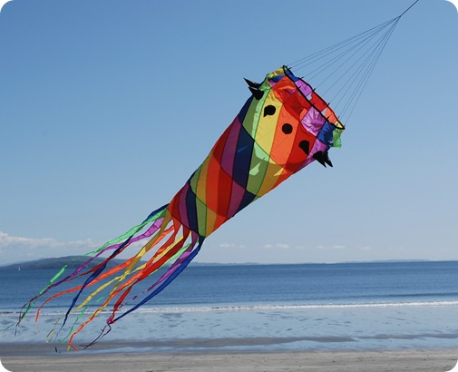 beach jelly kite 2