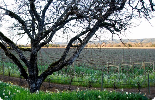 dry creek valley tree