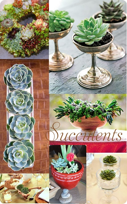 succulents collage