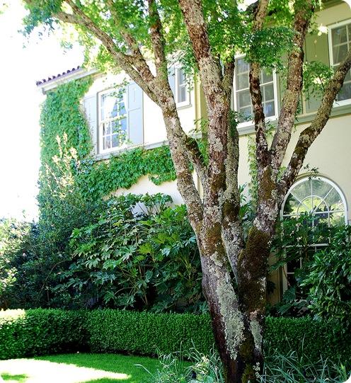 chateau st jean tree