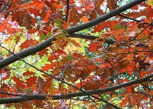 autumn oak via mooseyscountrygarden