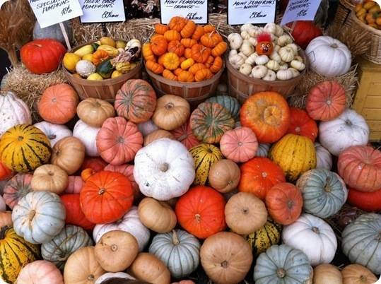local pumpkins