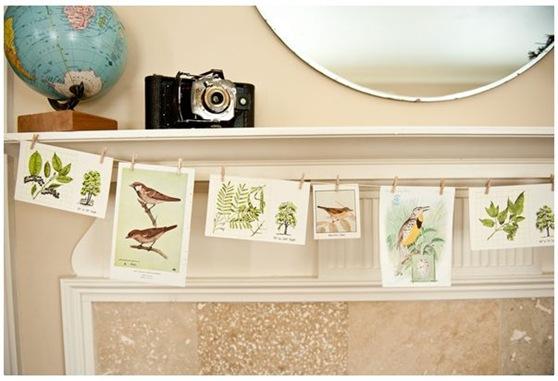 bird postcards livingthe lifeswell