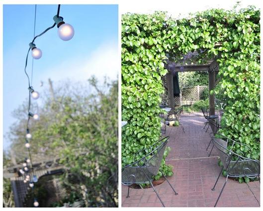 string lights ivy