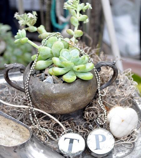 succulent in silver