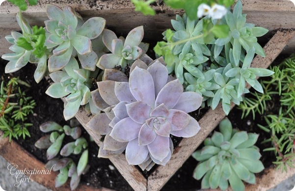 kates succulents in planter