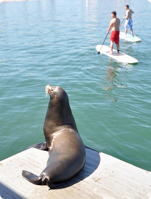 sea lion on dock