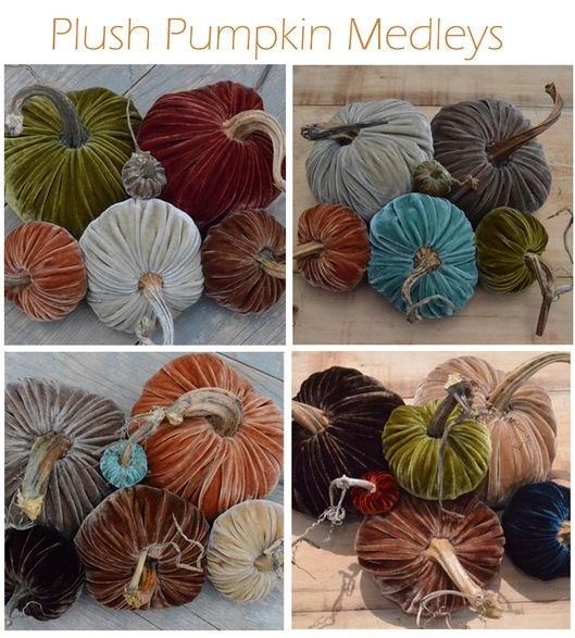 plush pumpkin medleys