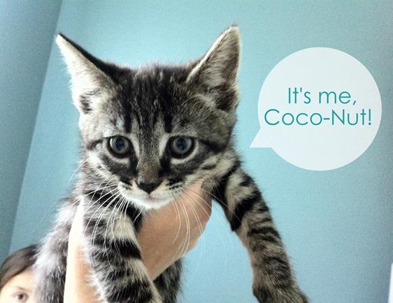 CocoNut the kitten